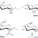 Cellulose sulfate – Yếu tố ngừa thai, HIV,STI khả thi