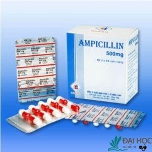 Thuốc ampicilin có tác dụng gì